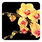 Exotic Flowers Live Wallpaper