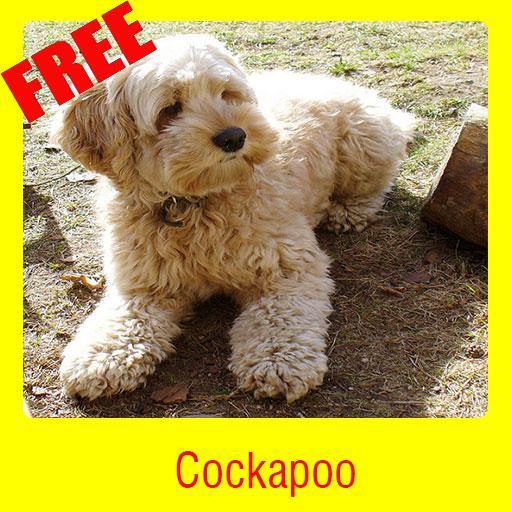 Cockapoo 教育 App LOGO-硬是要APP