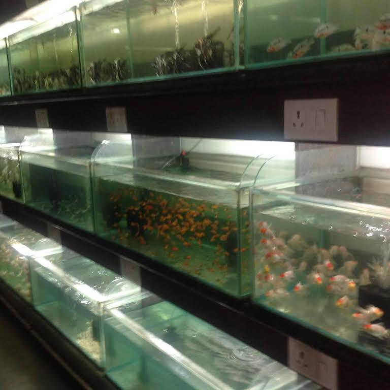 Fish O Fish Aquarium Tropical Fish Shop