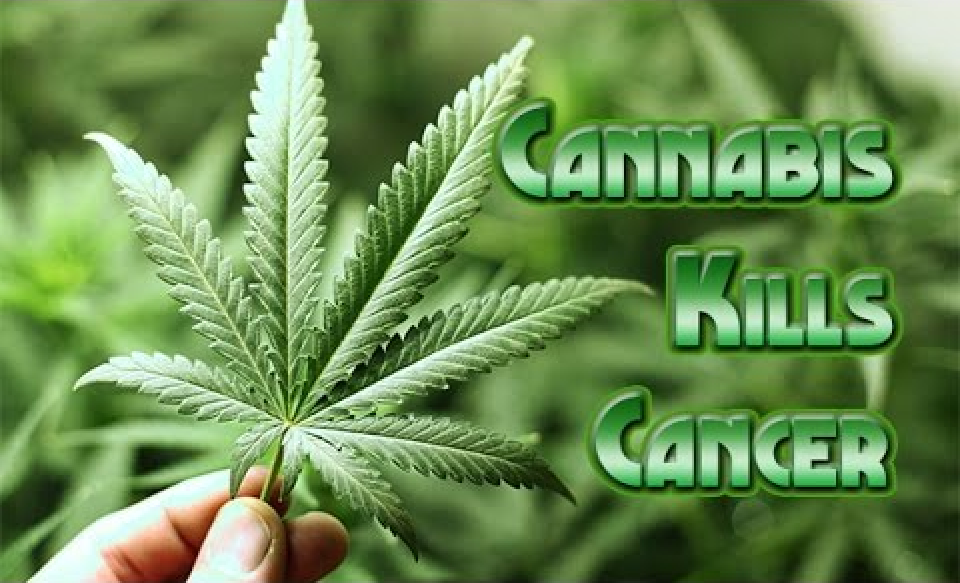 Proof Cannabis/Marijuana Does Kill Cancer!