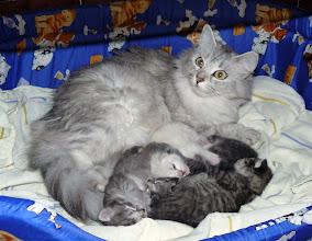 Photo: Trufa con sus 4 cachorros