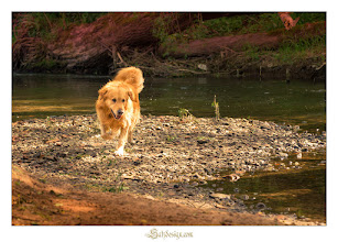 Photo: Badespaß #Buddy #Coburg #Goldenredriever #Hund #Itz