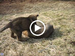 Video: VIDEO: Ailo og Ask