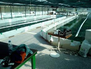 Photo: ferme de Spiruline et plantes de Savoie http://etoile-verte.com/