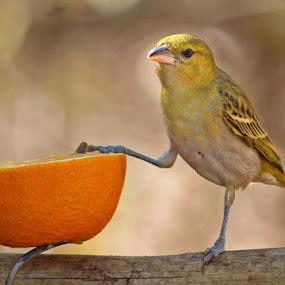 Having lunch by Elsa van Dyk - Animals Birds