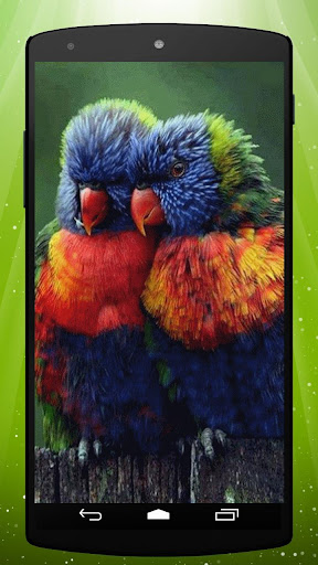 Parrots Live Wallpaper