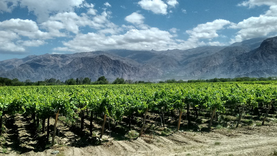 Image result for south american vineyard