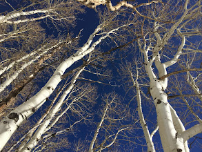 Photo: Tree skiing