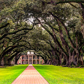 Oak Alley Plantation by John Larson - Buildings & Architecture Homes ( path, plantation, old, grass, trees, home )