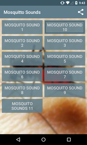 Mosquito sounds