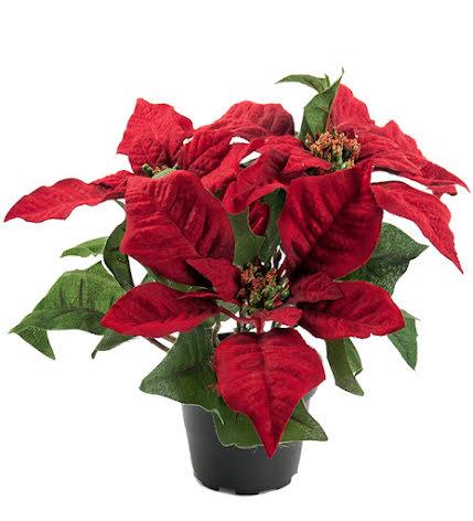 Julstjärna röd 23 cm