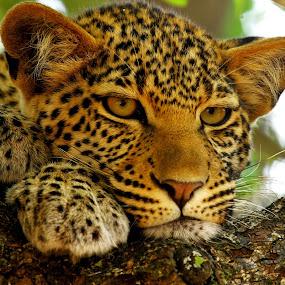 by Gareth Carter - Animals Other Mammals ( fantastic wildlife )