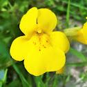 Common yellow monkeyflower
