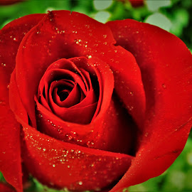 by Michelle Brush - Flowers Single Flower (  )