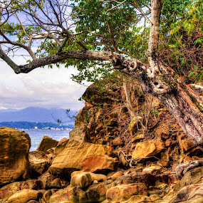 old tree by Lubelter Voy - Landscapes Travel ( water, sky, nature, tree, stone, sea, rock, place, island )