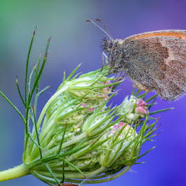 Alone by Jaro Miščevič - Animals Other ( macro, butterfly, animals, morning, flower, colours )