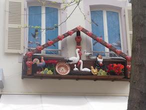 Photo: Uns dels símbols de l'Alsàcia és la cigonya blanca.