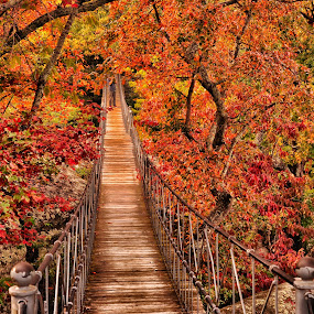 Autumn Colors by Abet Rhupert - Landscapes Forests ( hanging bridge, fall, tennessee, pwcautumn, bridge, travel, autumn colors, landscapes, suspended structures )