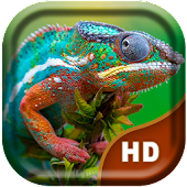 3D Chameleon Live Wallpaper