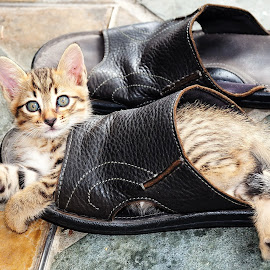 by Niney Azman - Animals - Cats Playing ( cutest cats )