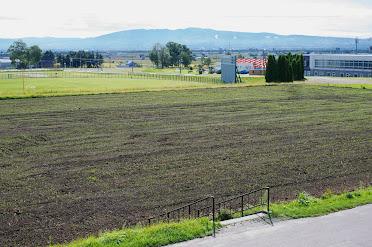 世界のひまわり畑