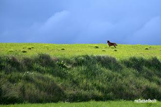 Photo: Esplendor en la hierba - Castrogonzalo [2010]