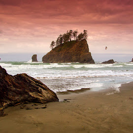 Rugged Coast by Ken Smith - Landscapes Travel ( olympic national park, ocean, landscape )