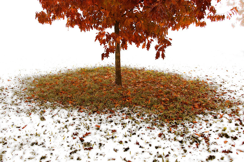 Autumn & Snow di GB1