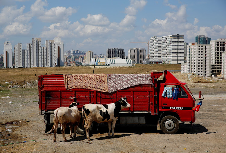 Cattle at a livestock market ahead of the Eid al-Adha in Istanbul, Turkey.