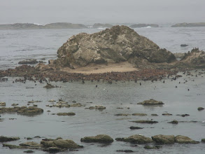 Photo: Piles of marine mammals