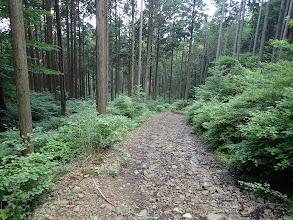 ここからは長い林道歩き