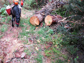 Photo: Some big trees had to be cut out
