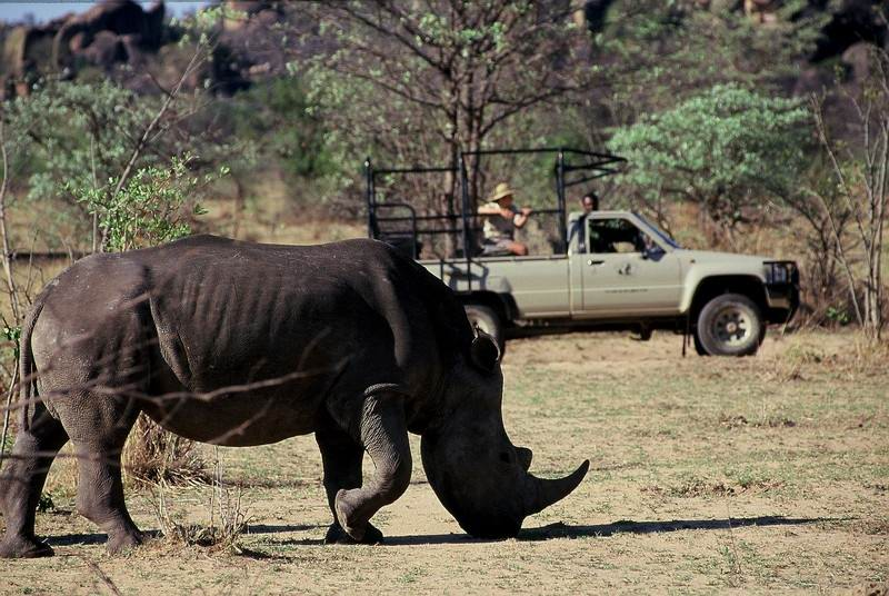 rhino found in the Matopos Park