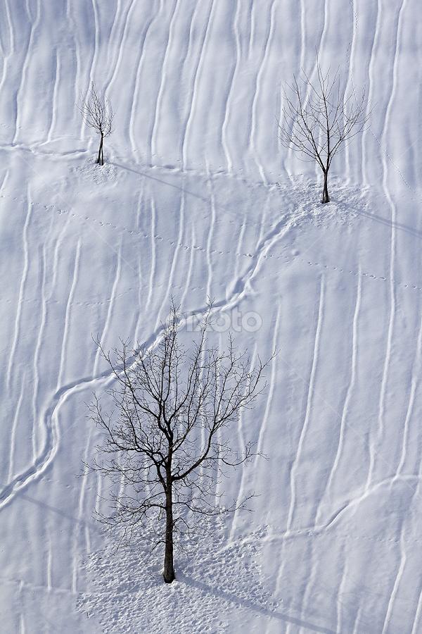 Simplitate. by Adrian Urbanek - Nature Up Close Trees & Bushes