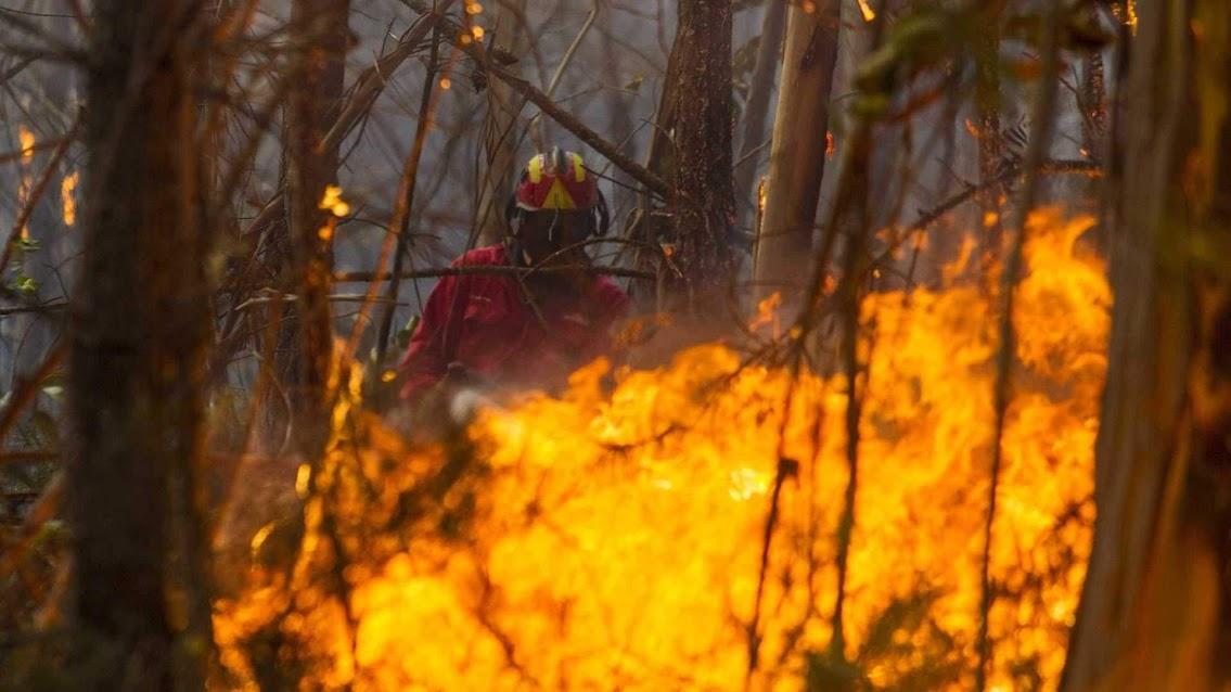 Lamego – Detido por incêndio florestal