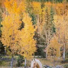 The Yellow Stud by Tara McKenzie - Animals Horses ( #seasons, farm, #landscape, #horses, nature, #horse, #pets, #animals, #colorfulhorses, #yellow, #fall, /#ranch )
