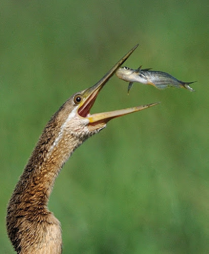 Catching Fish by Marcell Meyer - Animals Birds