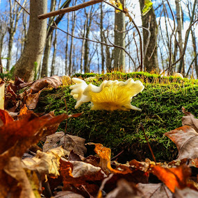 Hiding on the Long Trail by Bob Minnie - Nature Up Close Mushrooms & Fungi