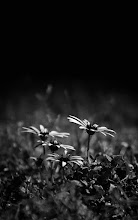 Photo: thats it for today........goodnight all #floralfriday curated by +Tamara Pruessner