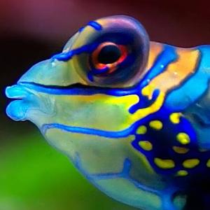 download fish swimming live wallpaper apk