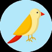 Tải Bạn là loại chim nào? Kiểm tra APK