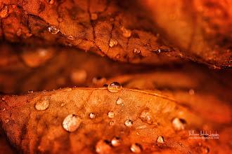 Photo: Drops fall