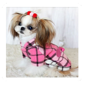 Amazing Dog Fashion Styles