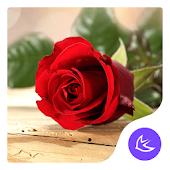 Red rose love - APUS Launcher theme
