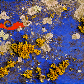 Touch of Red by Kittie Groenewald - Abstract Patterns ( abstract, contrasts, colours, lichen,  )