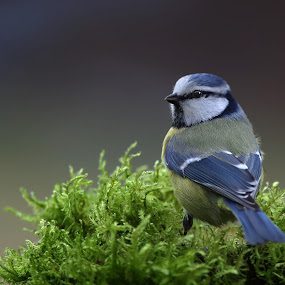 by Zeljko Padavic - Animals Birds