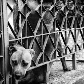 *** by Yasin Akbaş - Animals - Dogs Portraits