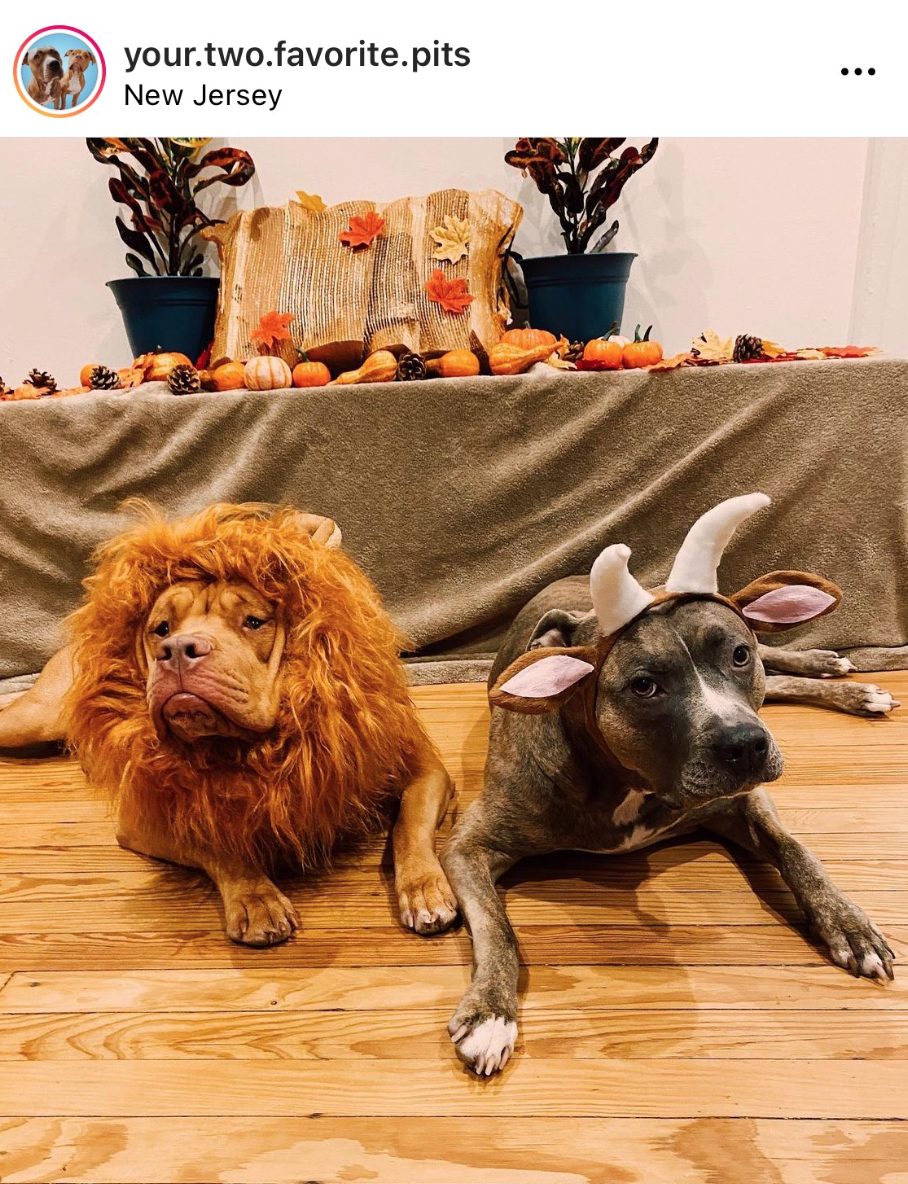 Lion and Lamb Halloween Costume Ideas For Dogs