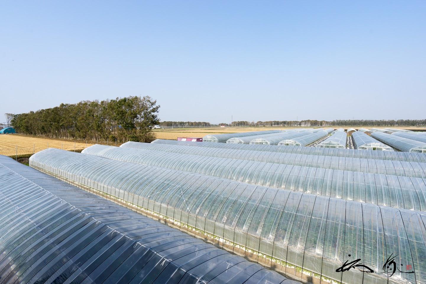 ハウス26棟が有機栽培ミニトマト