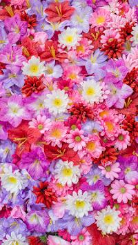 Download Wallpaper Bunga Sakura Aplikasi Versi Apk Terbaru Untuk